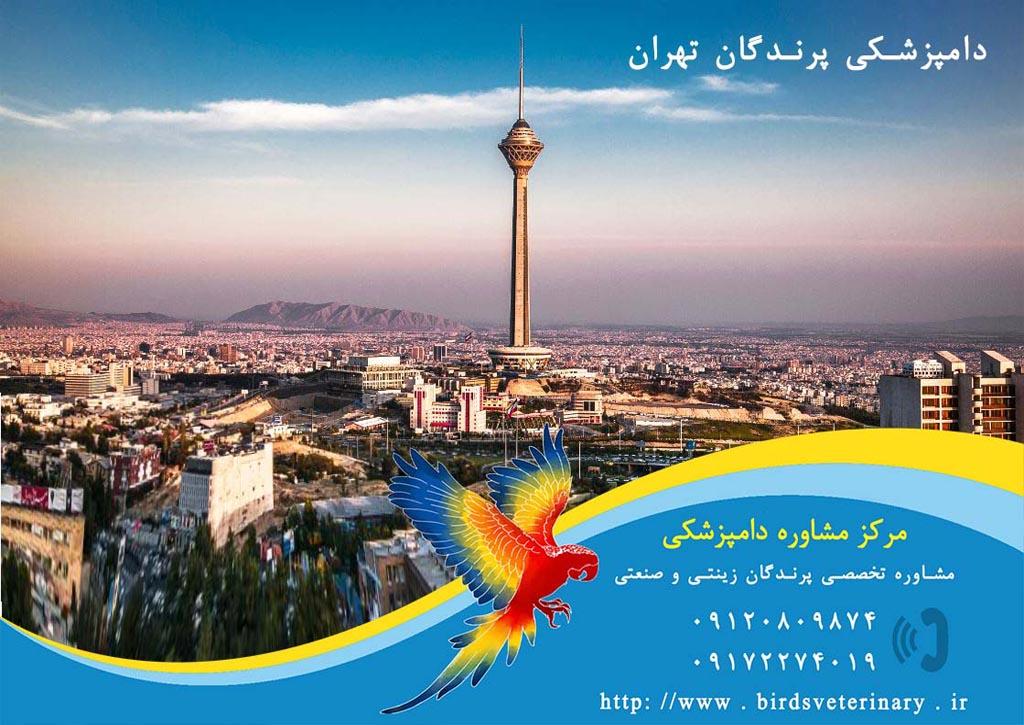 دامپزشکی پرندگان تهران
