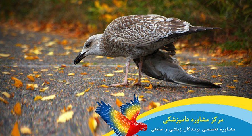 درمان شکستگی بال پرنده شیراز یزد تهران