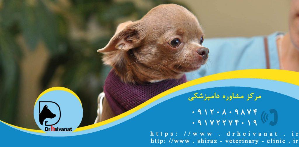 واکسیناسیون سگ شیراز