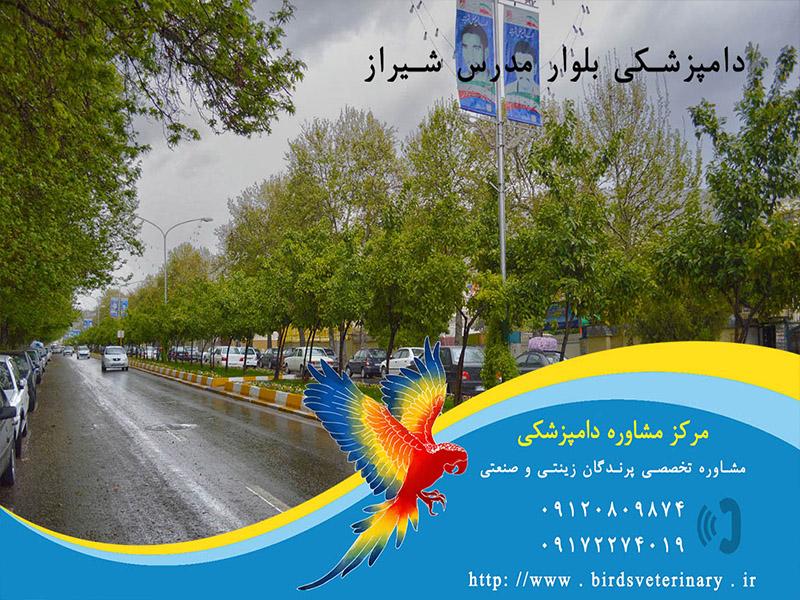 دامپزشکی بلوار مدرس شیراز